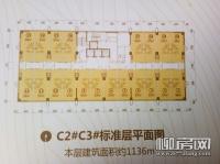 C2/C3公寓标准层平面图