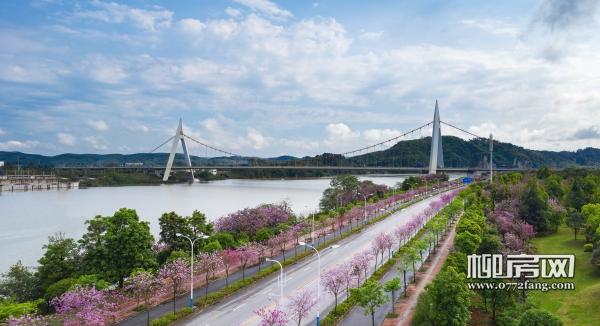 河东区鹧鸪江大桥.jpg