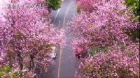 奥园瀚德·紫荆花城